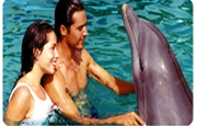 Dolphin Enjoy